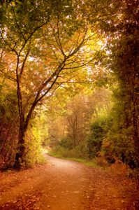 illumined path